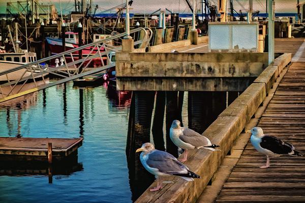 Seagulls Confer