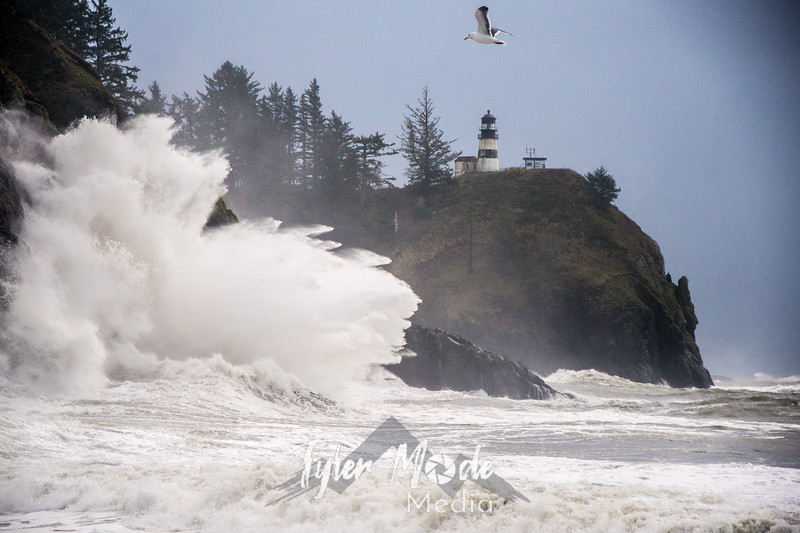 44  Cape Disappointment Waves Seagul