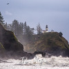 33  Cape Disappointment Waves Bald Eagle
