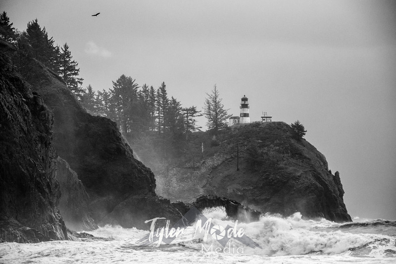 34  Cape Disappointment Waves Bald Eagle BW