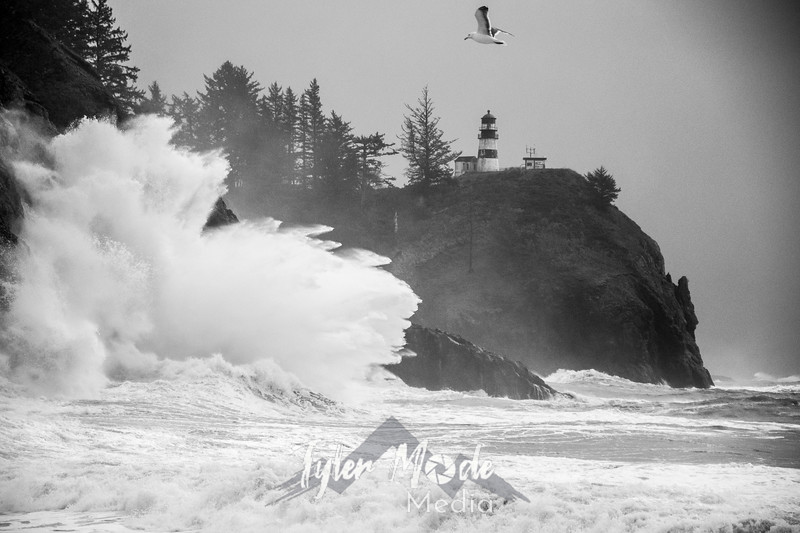 45  Cape Disappointment Waves Seagul BW