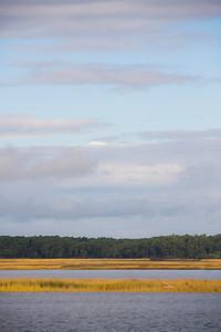 Golden Salt Marshes