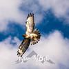 221  G Hawk