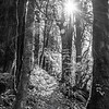 118  G Trail and Sun S BW V