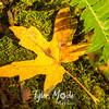 5  G Maple Leaf