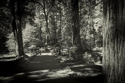 Trail to Yosemite Falls