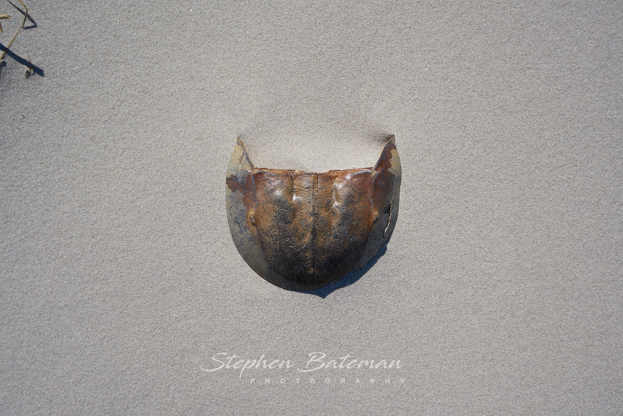 Empty Shell 2