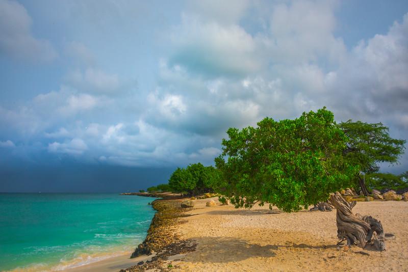 Shoreline Of Divi Divi Trees In Aruba - Aruba, Caribbean Islands