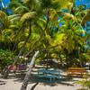 Palm Trees Criss Crossing - Salt Kay, Bahamas, Caribbean