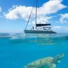 Sea Turtle Beneath The Catamaran Bridgetown, Barbados, Caribbean Islands