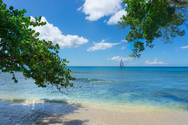 Sailing Into Paradise In Barbados Bridgetown, Barbados, Caribbean Islands