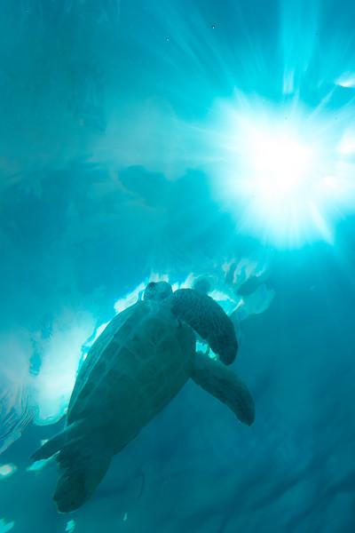 Swimming To The Light Bridgetown, Barbados, Caribbean Islands