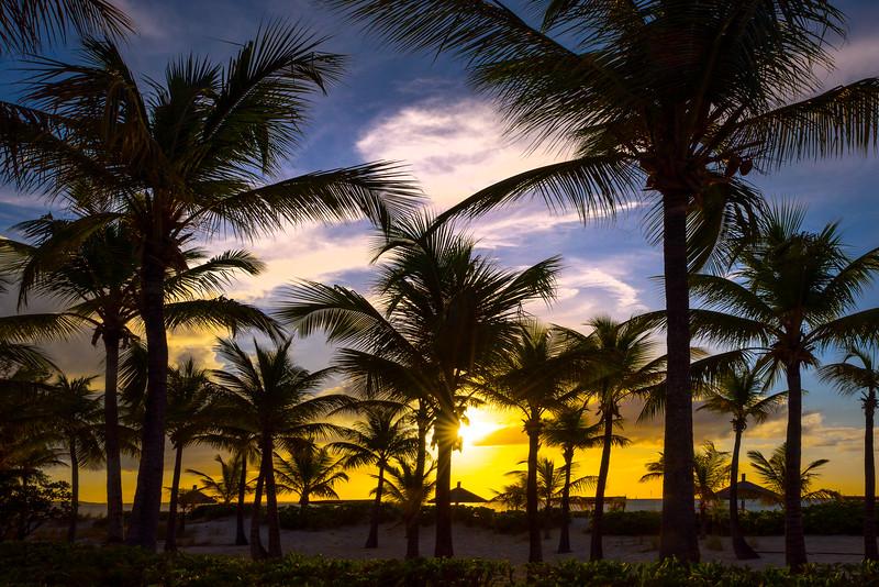 Tropical Palms Paradise - Grace Bay, Providenciales, Turks & Caicos, Caribbean