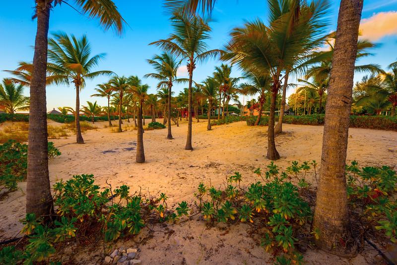 Tropical Palms Last SidelIight - Grace Bay, Providenciales, Turks & Caicos, Caribbean