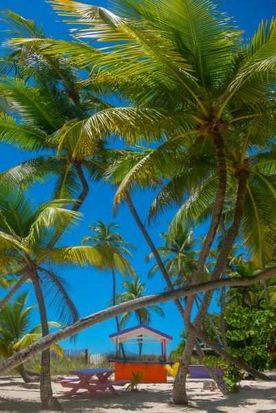 Criss Crossing Palm Trees And Red Hut - Salt Kay, Bahamas, Caribbean