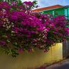 The Color Backroads Of Curacao - Curacao, Caribbean Islands