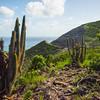 Hillsides Of Cactuses St Kitts, Caribbean Islands