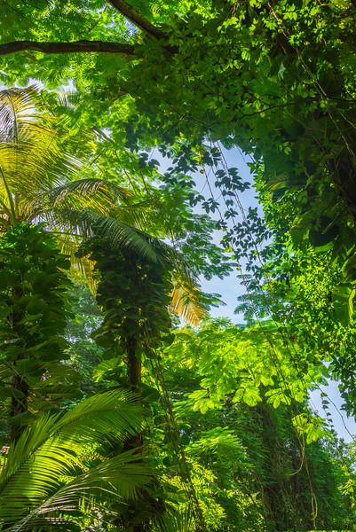 The Vibrant Greens Of St Kitts St Kitts, Caribbean Islands