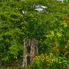 Gardens Of Eden On St Kitts St Kitts, Caribbean Islands
