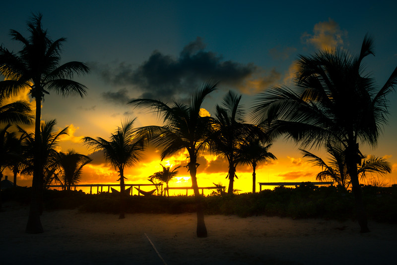 Afterglow Sunset Shining Through Palm Trees