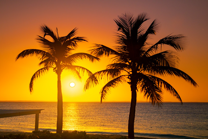 Watching The Sunset Framed By Tropical Trees