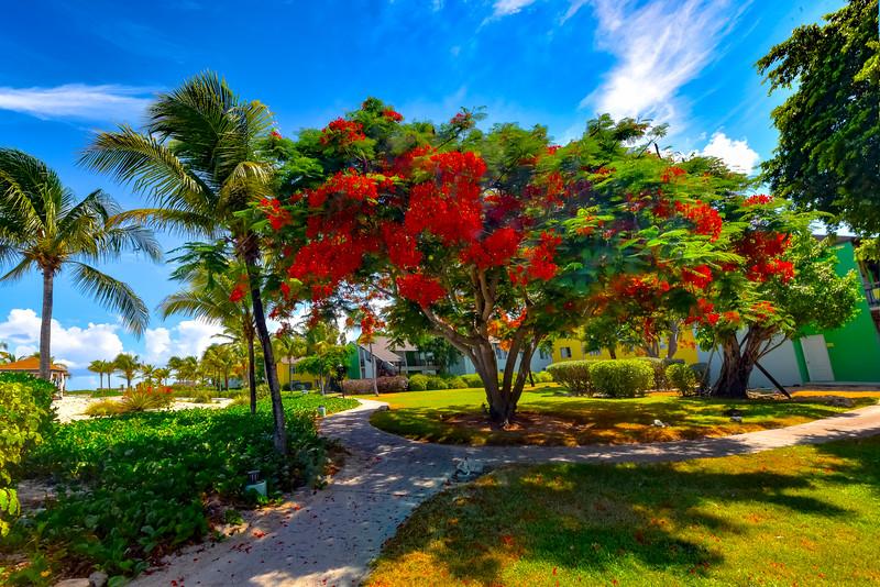 Gardens Color Around The Club Med Room - Grace Bay, Providenciales, Turks & Caicos, Caribbean