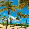 Palms Along The Beach