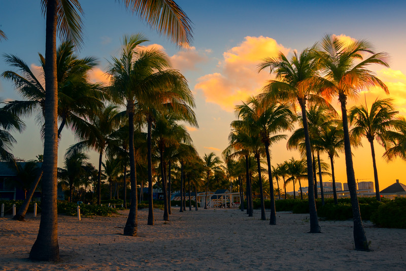 Double Row Of Palm Trees At Sunset
