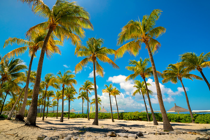 Fields Of Blue Sky And Palm Trees