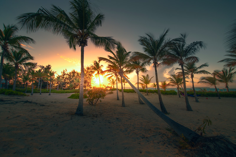 Sunset Into The Leaning Palm Tree