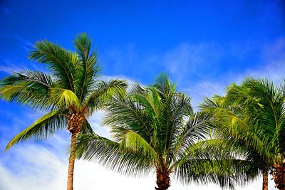 Palms-Miami, Florida
