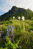 Coffin Mountain and Bear Grass