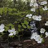 Little Dogwood Falls , East Prong, West Fork Point Remove Creek, Gulf Mountain WMA, Arkansas
