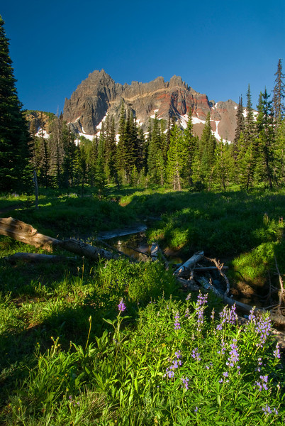 Canyon Creek Meadow and Three Fingered Jack