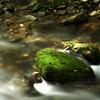 Mill Creek, Arkansas