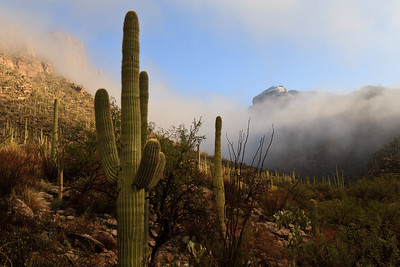 #67 Saguaro Mist, Catalina Mountains, AZ