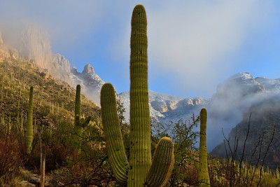#70  Saguaro Mist, Catalina Mountains, AZ