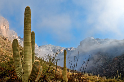 #68  Saguaro Mist, Catalina Mountains, AZ