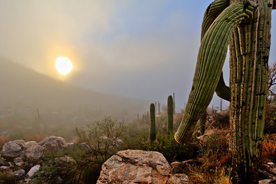 #65 Saguaro Mist, Catalina Mountains, AZ