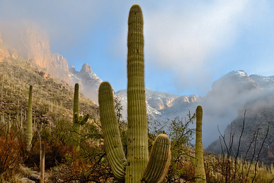 #69 Saguaro Mist, Catalina Mountains, AZ