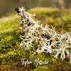 108  G Shroom Moss Lichen and Acorn