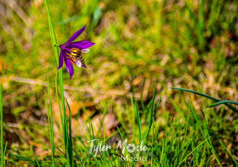 53  G Grass Widow and Bee