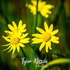 25  G Yellow Flowers Close