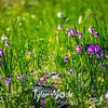15  G Grass Widows Wide