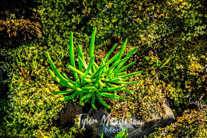 36  G Succulent