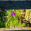 2  G Grass Widow Fence