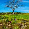 48  G Tree and Grass Widows V