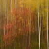 Autumn Motion Blur - 2