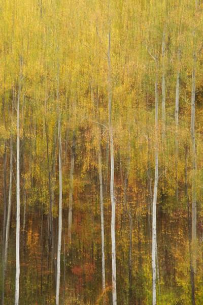 Autumn Motion Blur