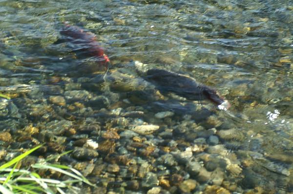 Ceadar River and Renton October 08
